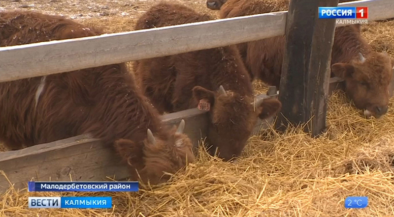 Зимовка скота пройдет на должном уровне