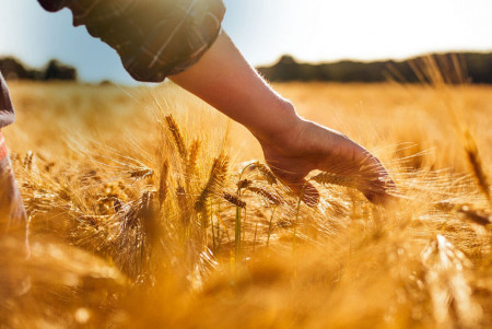 Господдержка сельхозтоваропроизводителям будет усилена
