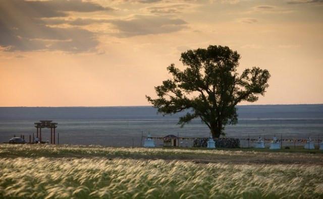Одинокий Тополь занял почетное третье место конкурса «Европейское дерево 2020 года»