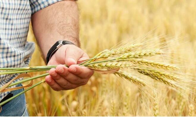 Сельхозтоваропроизводители Калмыкии могут воспользоваться госпрограммой «Агростартап»