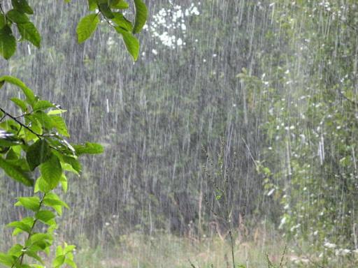 Майский дождь с градом не нанес серьезного вреда будущему урожаю