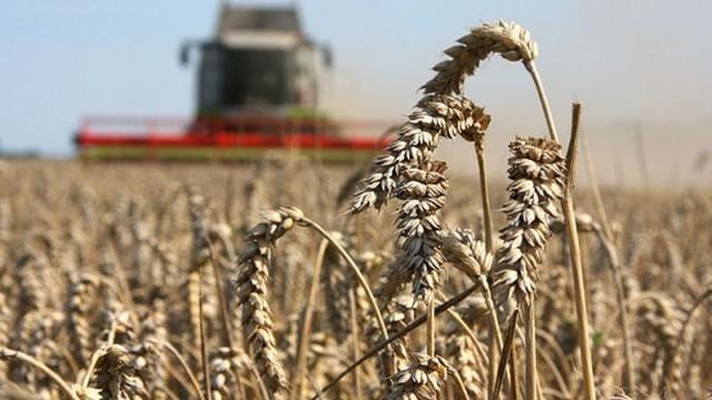 В министерстве сельского хозяйства продолжается прием документов на оказание господдержки аграриям