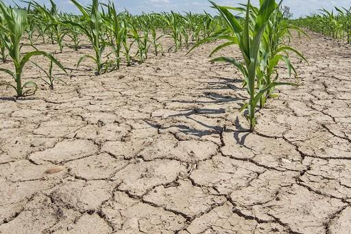 Пострадавшим аграриям будет оказана поддержка из резервного фонда Правительства региона