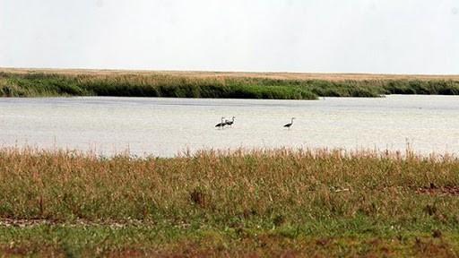 Сразу пять крупных водоемов в Черноземельском районе обмелели