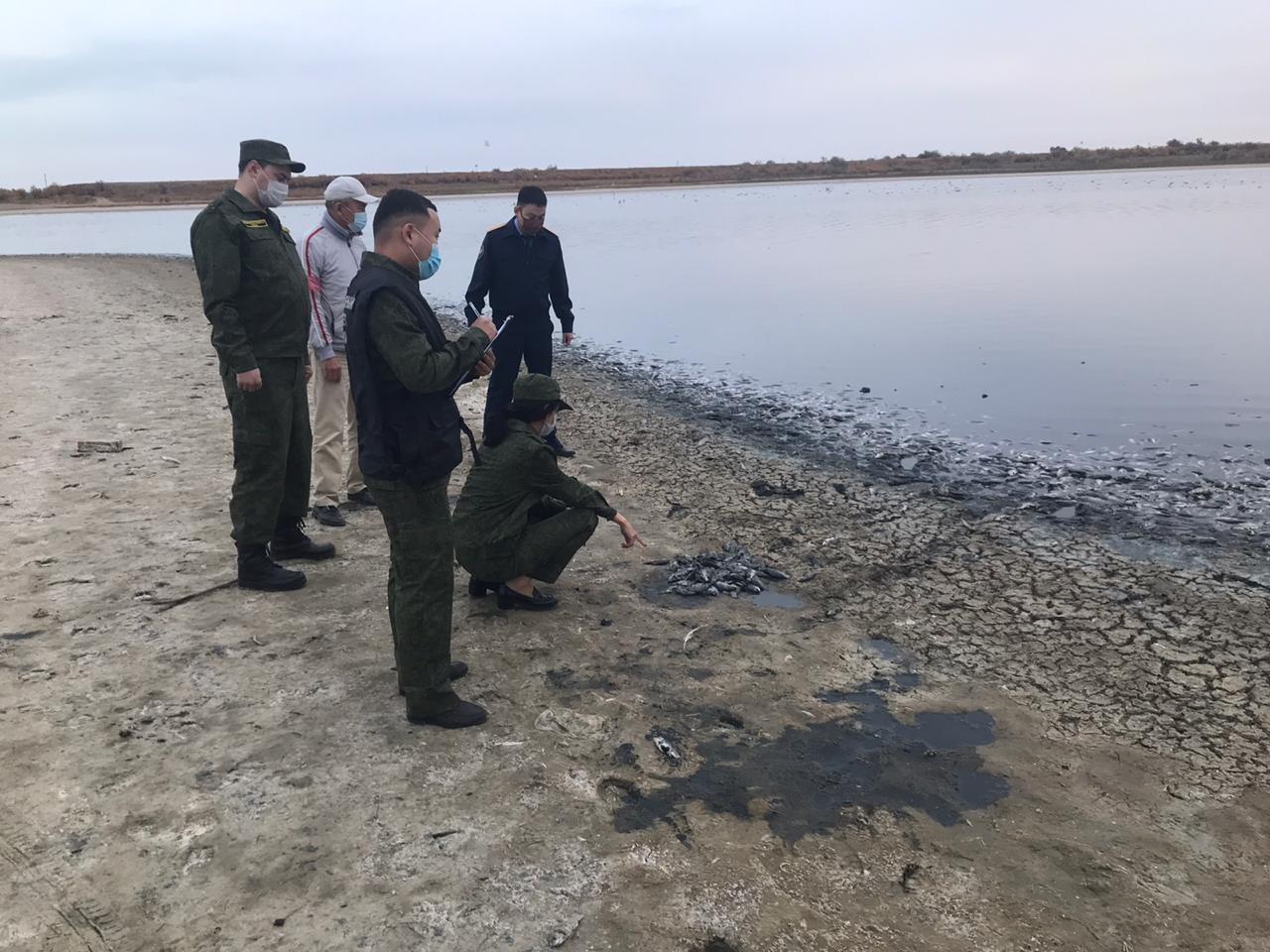 Причины массовой гибели рыб на Аршань-Зельменском водохранилище станут известны к концу текущей недели