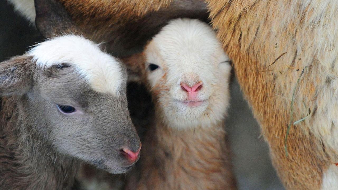 Не допустить отхода поголовья - в период зимовки задача номер один для животноводов Калмыкии