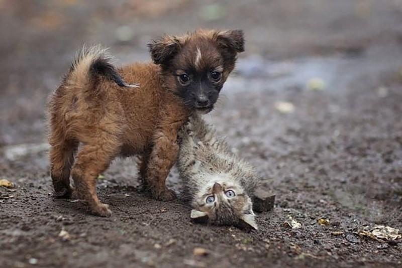 В Элисте ведется подбор земельного участка под строительство приюта для бездомных животных