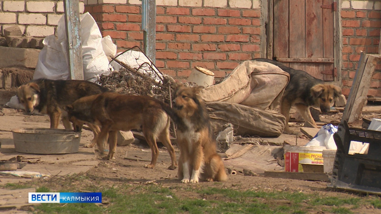 Как защитить жителей от бродячих животных, но не дать пропасть четвероногим на улице?