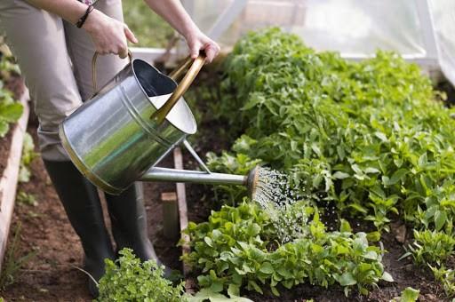 Дачники смогут вернуть 13 процентов от уплаченного подоходного налога за строительство на садовом участке