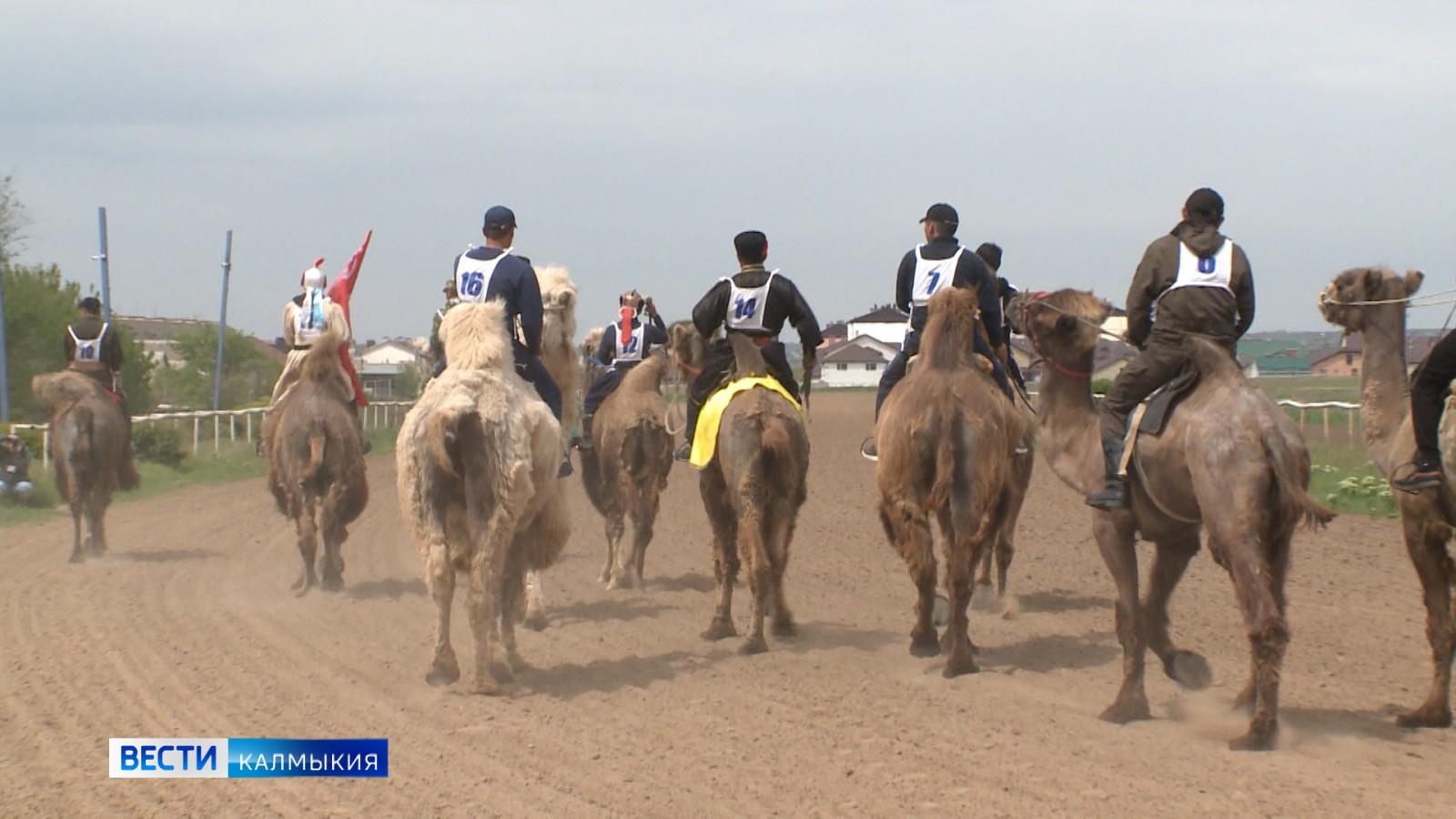 На Элистинском ипподроме прошел конно-спортивный праздник