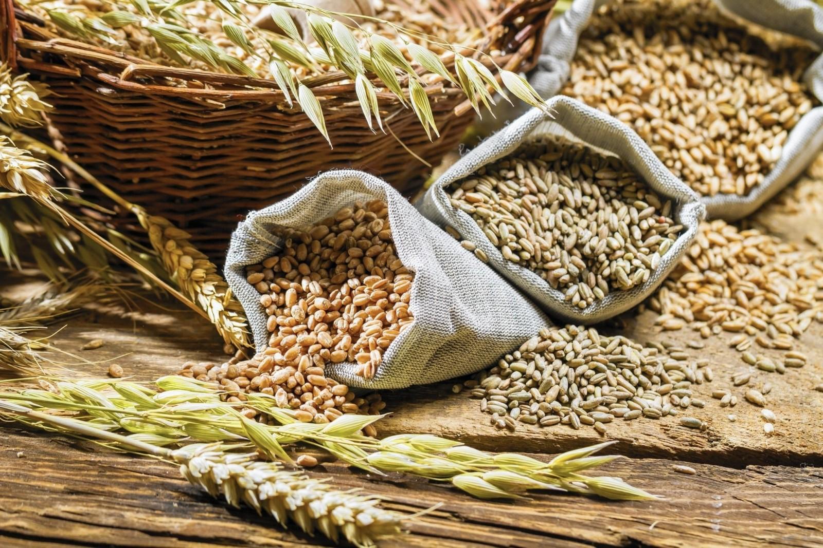 Управление Россельхознадзора проводит сертификацию зерна нового урожая