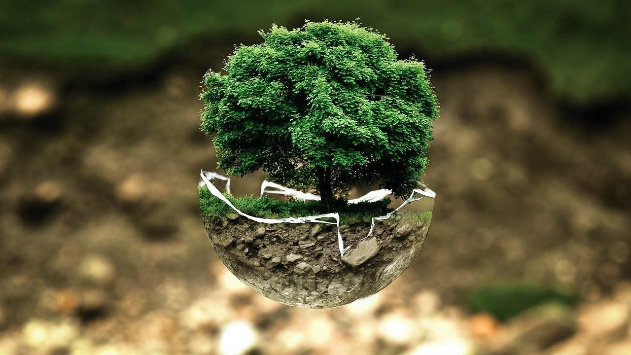 Блогеры-экологи из Калмыкии могут принять участие в конкурсе ЭкоLife