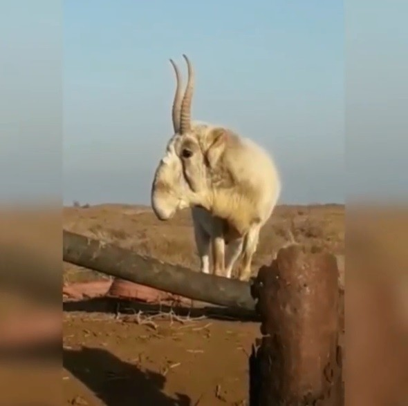 """Животные в заповеднике """"Черные земли"""" выходят к людям"""