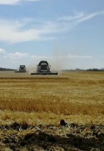 В Городовиковском районе продолжается уборка зерновых