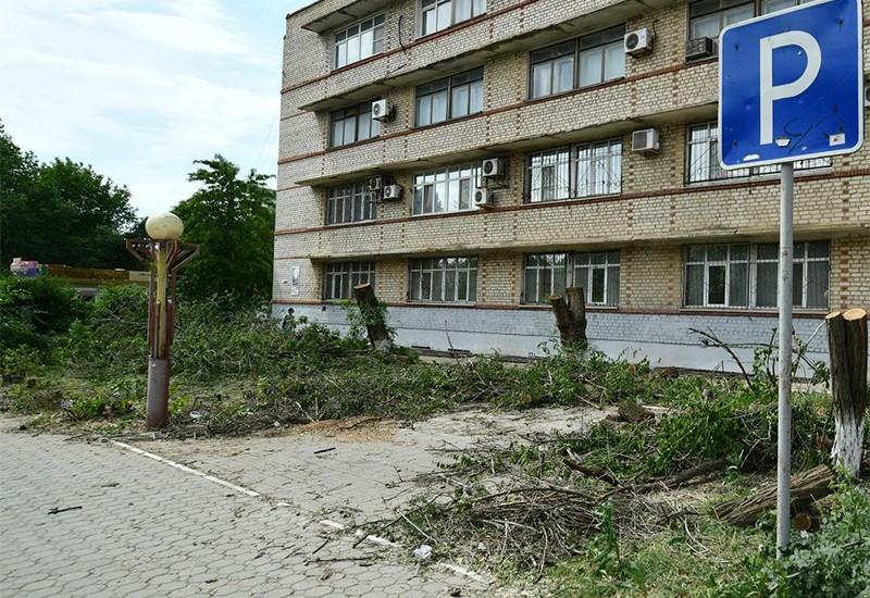 По факту незаконной вырубки деревьев в Элисте возбуждено уголовное дело