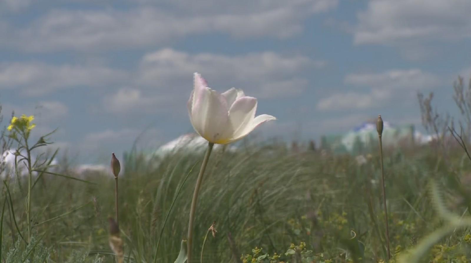 Эколого-биологический центр учащихся проводит республиканский поэтический конкурс