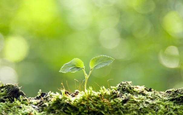 В Элисту прибыли специалисты из Московской школы ухода за деревьями «Здоровый лес»