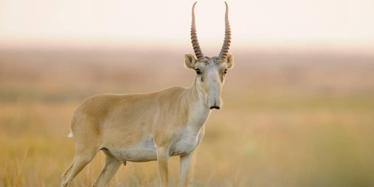 3 марта - Всемирный день дикой природы