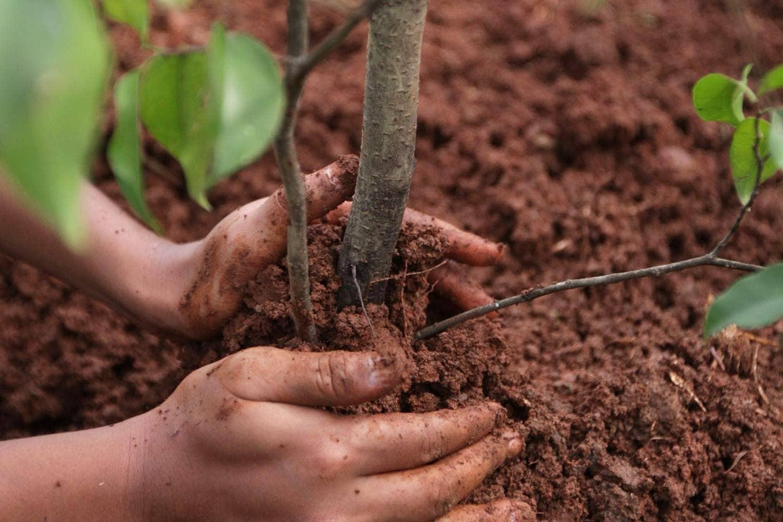 «Сохранение лесов». В Минприроды Калмыкии подвели итоги исполнения регионального проекта
