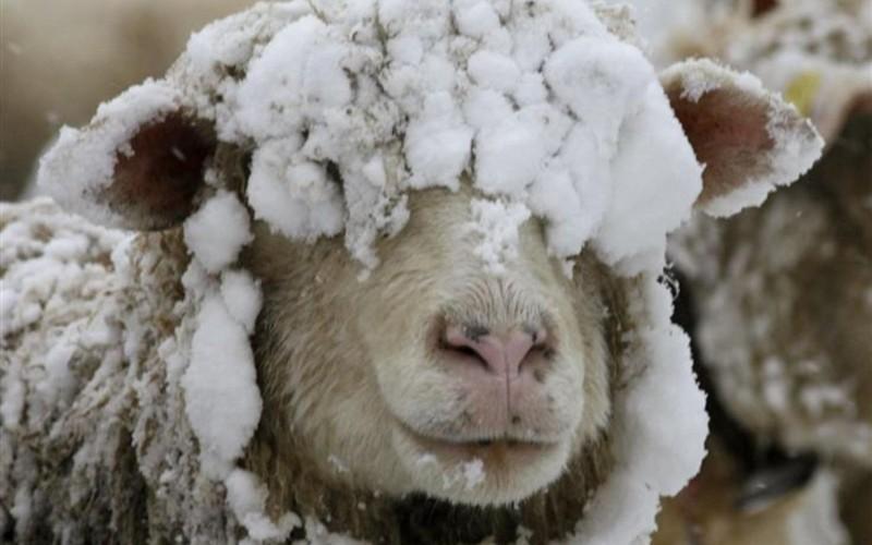 У животноводов республики продолжается ответственный период - зимовка скота